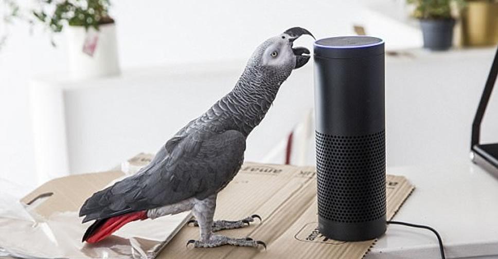 parrot-buddy